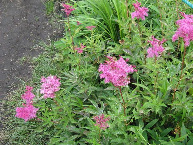 八島湿原の花2008