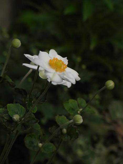 RIMG1118