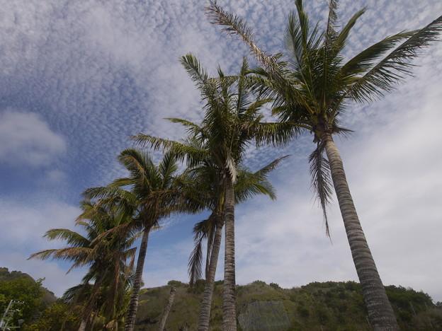 母島の海岸沿い