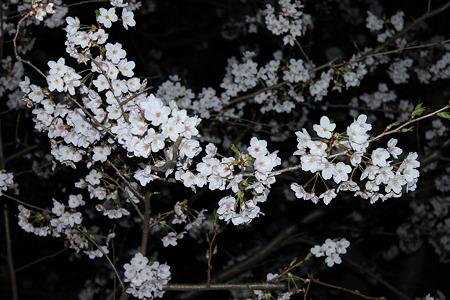 2010.04.04 夜桜(3/3)