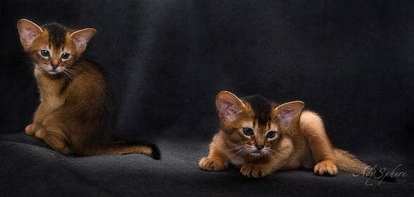 kitten1026_14
