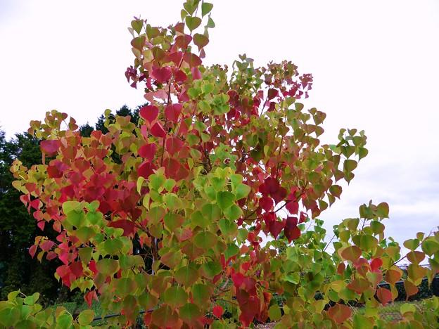Photos: 秋の色 1