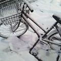 写真: かわいそうな自転車(@_@)