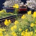 写真: 春に囲まれて