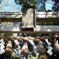 Photos: 世田谷線:宮の坂駅界隈_世田谷八幡宮-02b