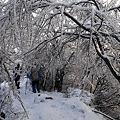 写真: 雨氷のアーチ