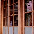 Photos: ガラス戸