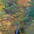 Photos: 樹間に望む大久保の滝