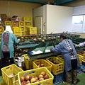Photos: 農産物直売所『松永うの花農園』048