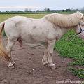 Photos: horse ♂