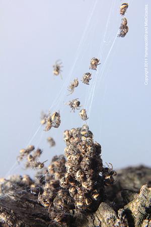 yamanao999_spider_192