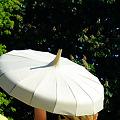 Photos: 白い蓮