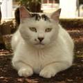 公園猫 2014.6.26(おまけ)