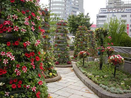 浜松は花の街