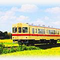 竜ヶ崎線 キハ532