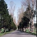 写真: トラピスト修道院への道