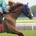 写真: フリーウェイS ベイリングボーイ 返し馬