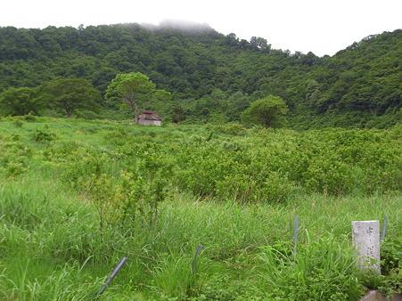 中ノ俣牧場