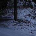 Photos: 12月14日「初雪」