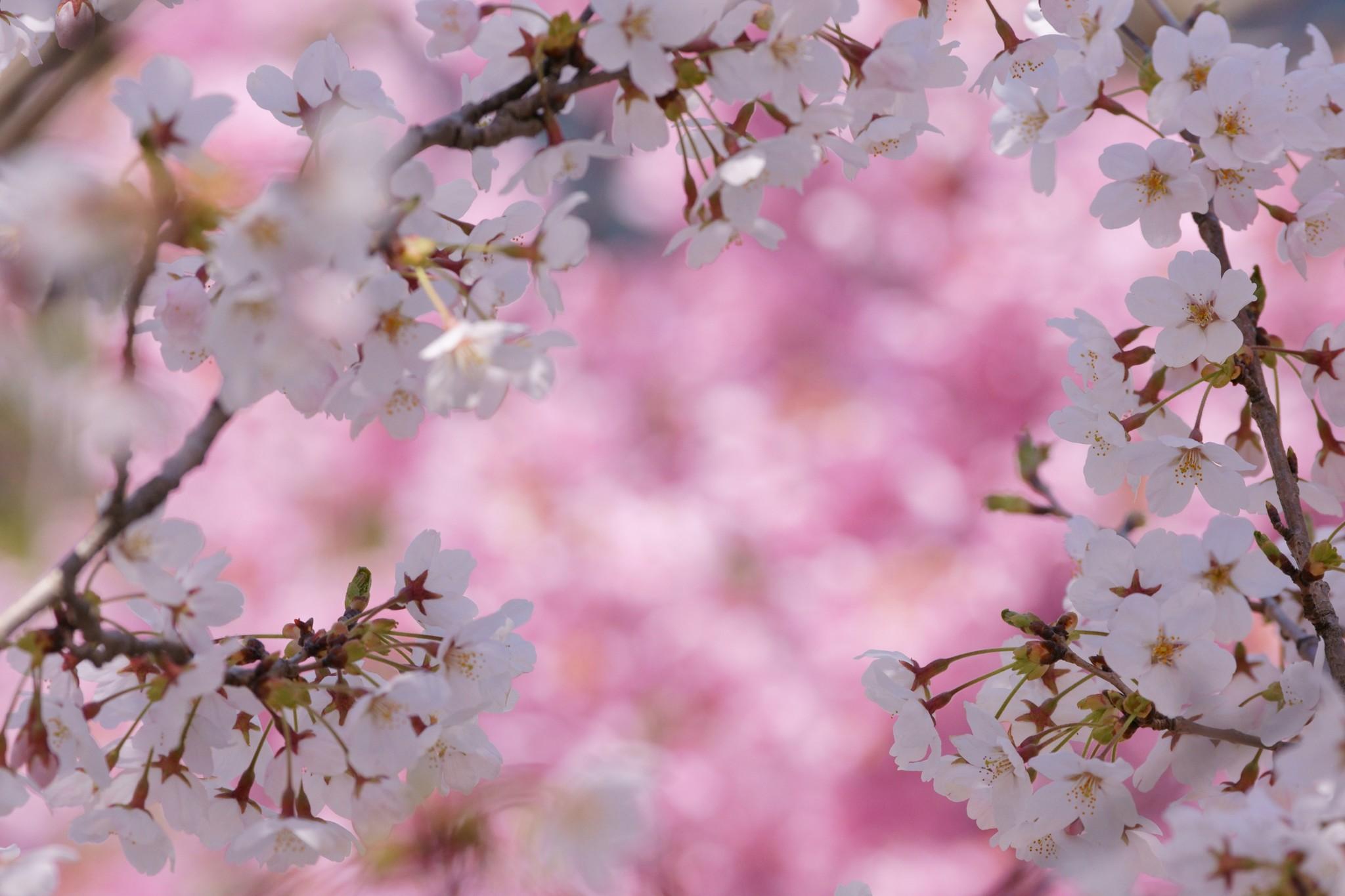 捲り来る春