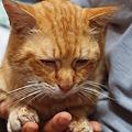 写真: 歯肉炎が悪化して危篤状態からようやく脱したボクチン