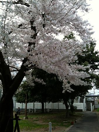 桜2010_10