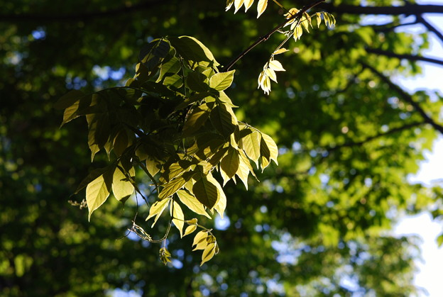 Photos: The Leaves 5-23-12