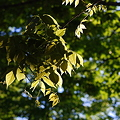 The Leaves 5-23-12