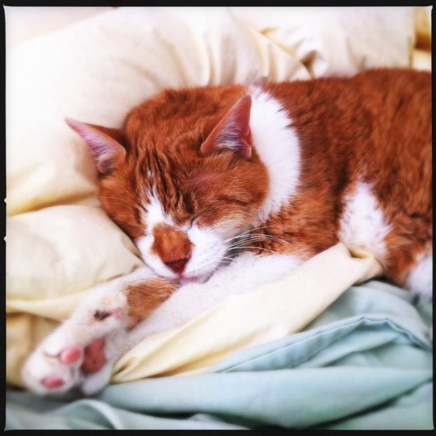 Sleeping Billy 3-17-12
