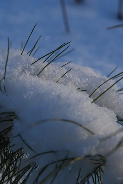 写真: Shiny Snow