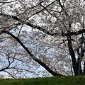 Photos: 2010_0410_114211