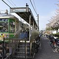 Photos: 都電荒川線の春と桜2010年4月_DSC7042