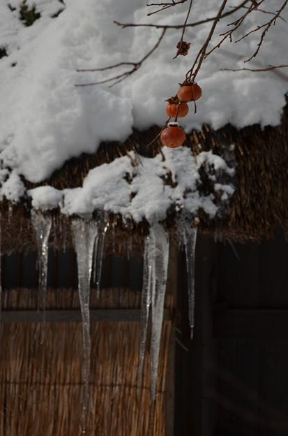 木守りの冬