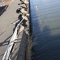 Photos: 液状化による護岸の崩壊