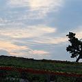 ぜるぶの丘の夕景~☆