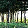 夕陽が差し込む林