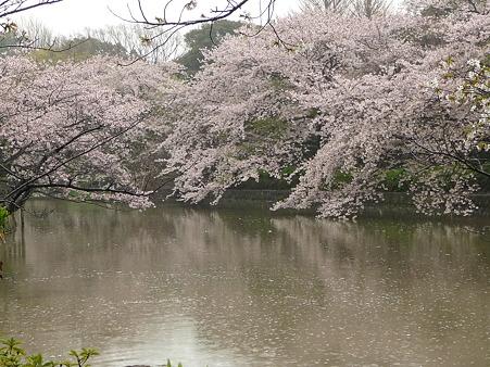 100405-八幡さま (44)