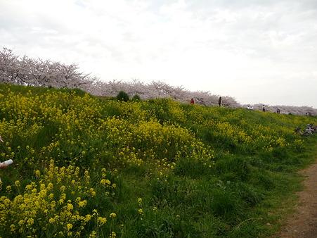 100411-熊谷桜堤 (36)