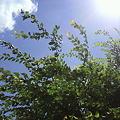 写真: 夏到来