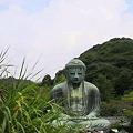 写真: 鎌倉大仏様