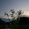 Photos: 山くじらに花束を