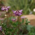 写真: 201104flower 329
