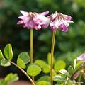 写真: 201104flower 334