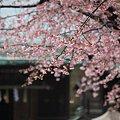 Photos: 花の神域3