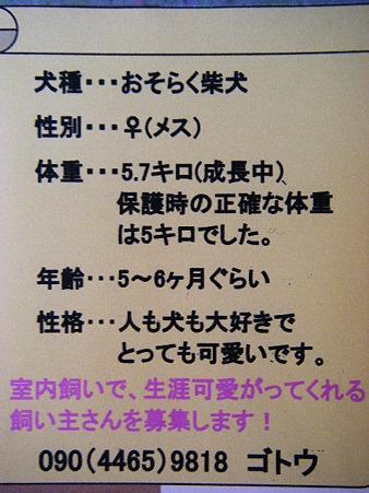 里親募集 (2)