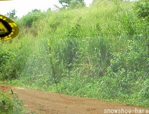未舗装道路と草ボーボー