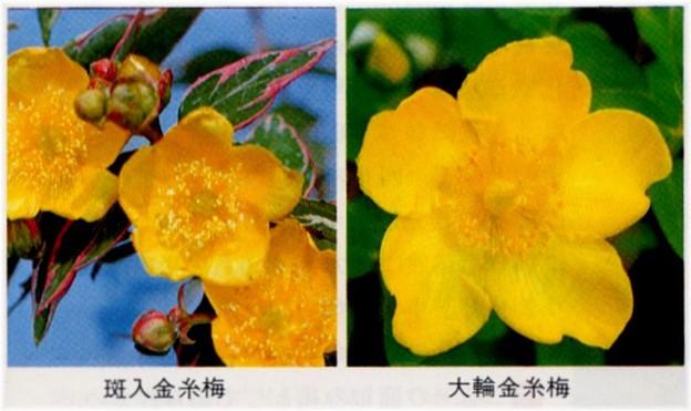 日本花卉S53年のカタログ・・・