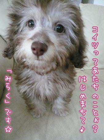 新入りダップー「みらく」現る! 2