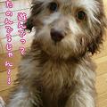 写真: 110126 みらく of the day 2