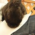 写真: ミニレッキスのブラックです!